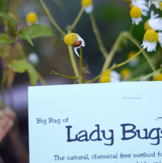 Bugs-13