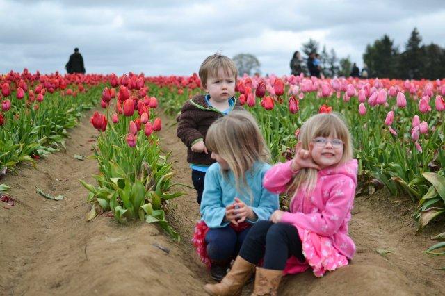 Tulips 2016-11