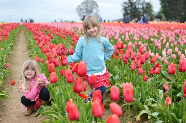 Tulips 2016-12