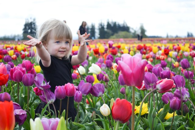 Tulips 2016-21